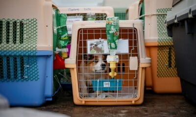 Rabies,Soi Dog Foundation Calls on US CDC to Revise Dog Import Ban