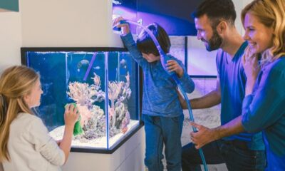 6 Proven Tips on How to Set Up the Perfect Fish Tank