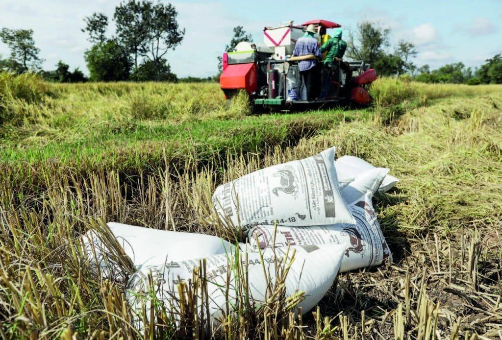 Baht, Thailand, world's biggest rice exporter