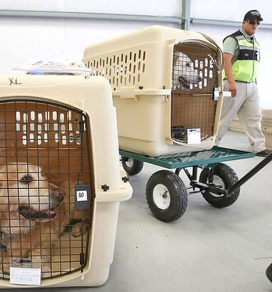 US Bans Dogs from Thailand and other Countries Over Rabies Risk