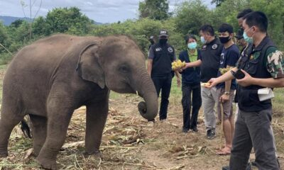 Wildlife Resources Officials Seizes Suspected Wide Elephant from Camp