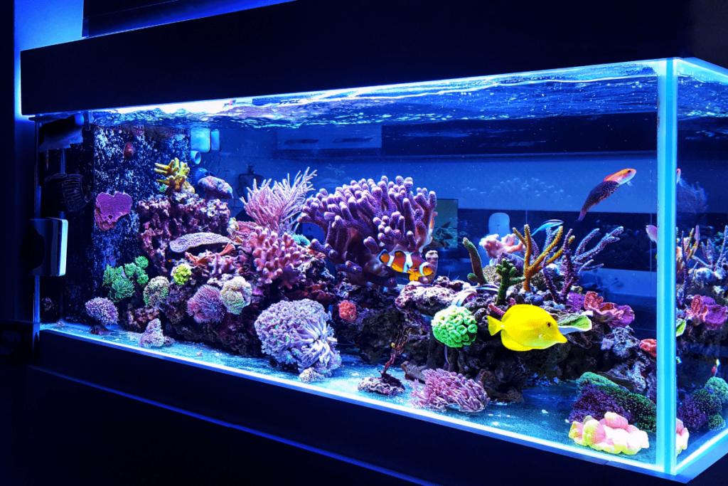 fish tank lighting