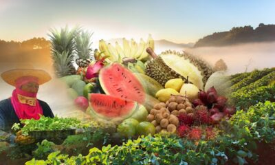 Agri-Food Industry is Thailand's Opportunity for Economic Recovery