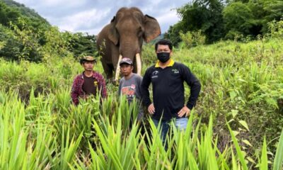 Elephant and Mahout Find Man Missing in Northern Thailand Forest