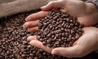 Learning How to Pick the Best Coffee Beans to Purchase