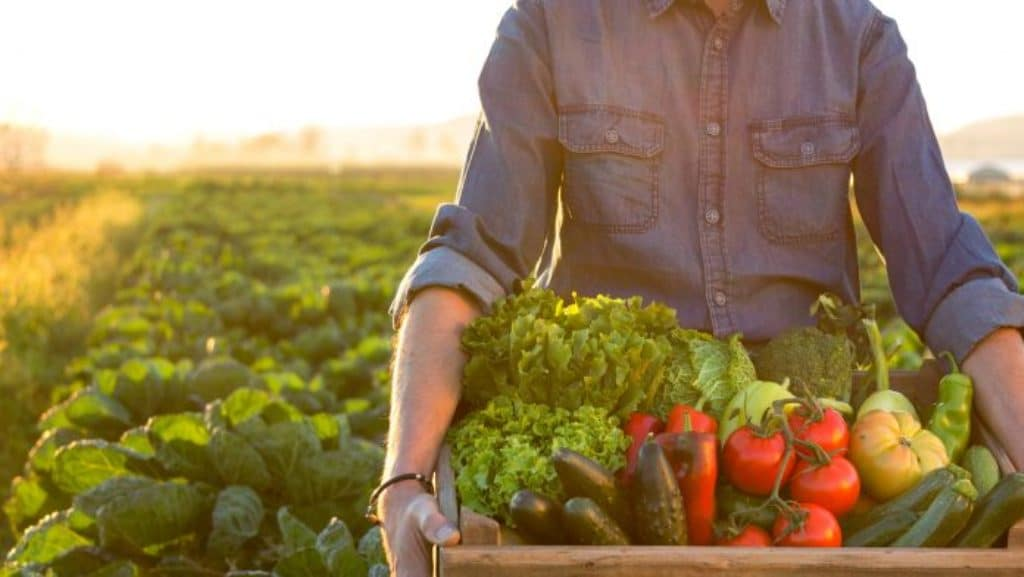 Learning Why Supply Chain Consulting Benefits the Agrifood Industry