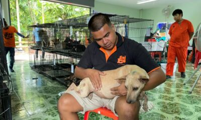 Soi Dog Foundation Launches Mobile Clinic in Surat Thani