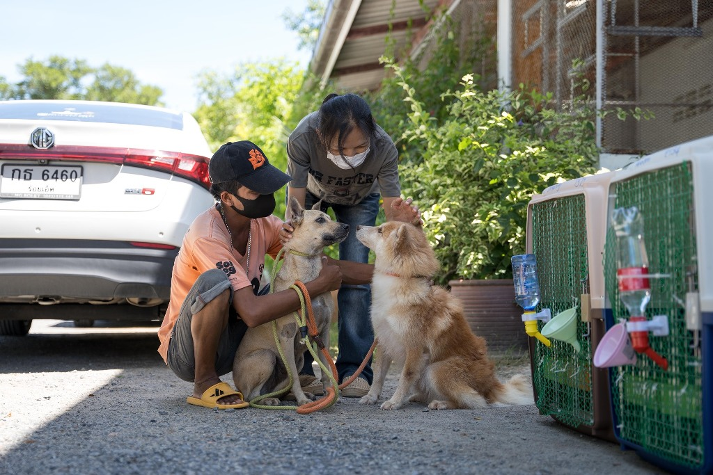 Soi Dog Foundation Houses a Record Number of Rescued Dogs in U.S.