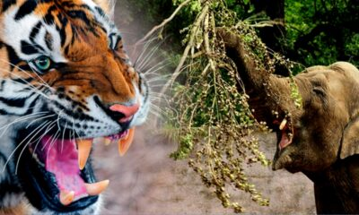 Thailand Launches Wildlife Campaign Against Sale of Ivory and Tiger Products