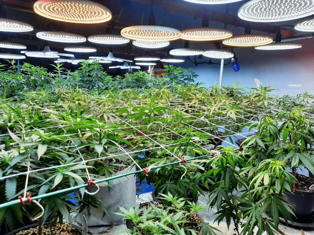 Two Men Arrested for Setting up Hydroponics Grow Op in Apartment