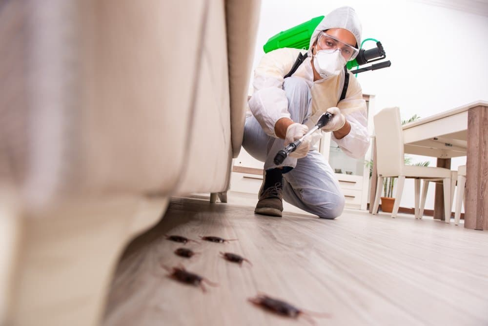 Dealing With Pests? 24H PEST PROS Can Help You with Pest Control