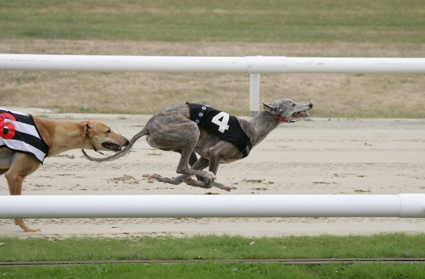 greyhound, Exploring the UK's Greyhound Derby Venues Throughout the Years