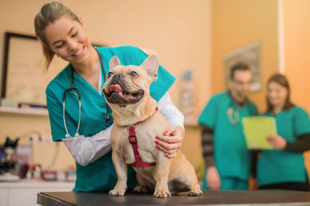 What are the Requirements for Getting into a Good Vet School?