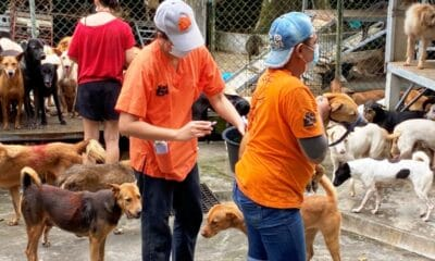 Soi Dog Foundation Vaccinates Over 700 Stray Dogs in Phuket