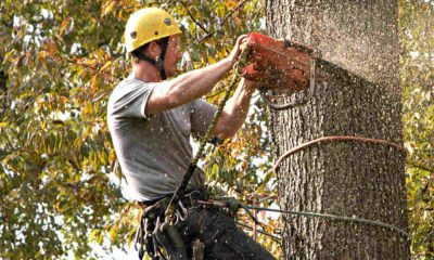 5 Reasons to Get Tree Trimmer Insurance for Your Company