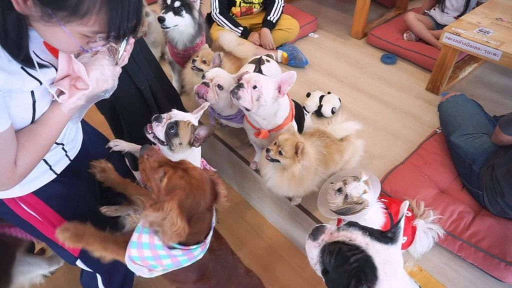 Covid Puts Renowned Dog Cafe in Northern Thailand Out of Business