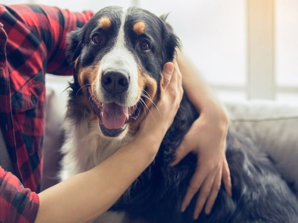 International Dog Day 2020: History, purpose and how to celebrate