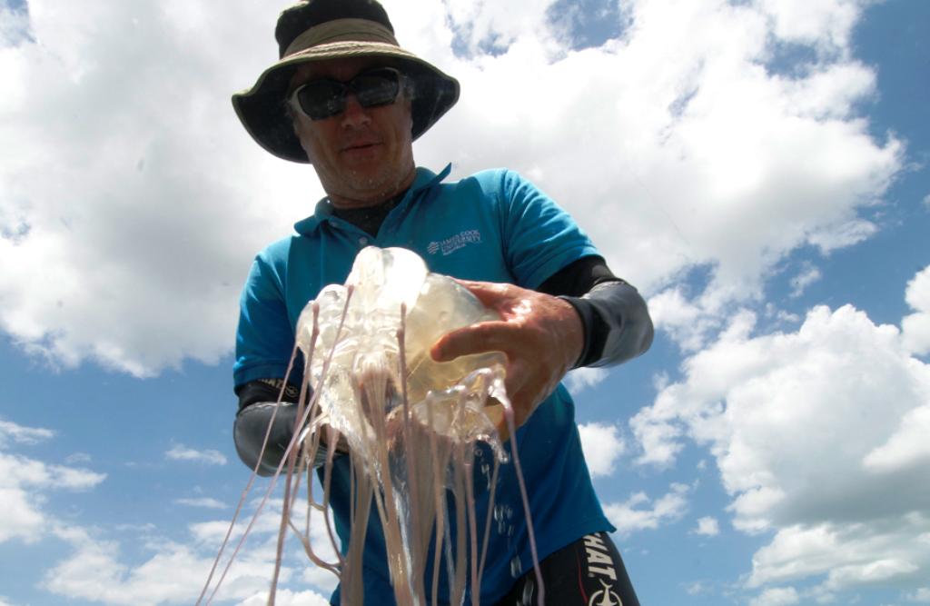 Israeli Boy, 9, Dies After Box Jellyfish Sting in Ko Pha Ngan, Thailand