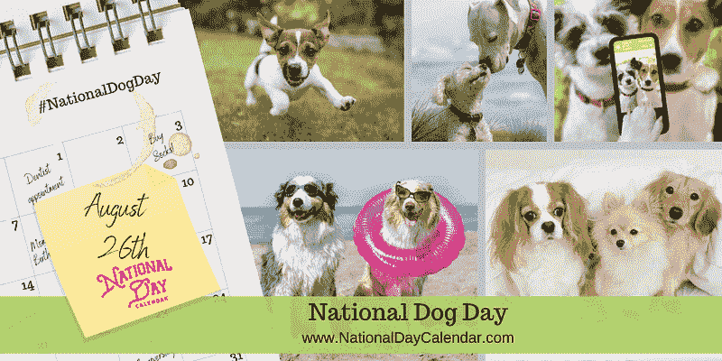 national dog day 2021