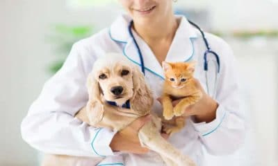 5 Reasons to Pursue a Degree in Veterinary Science