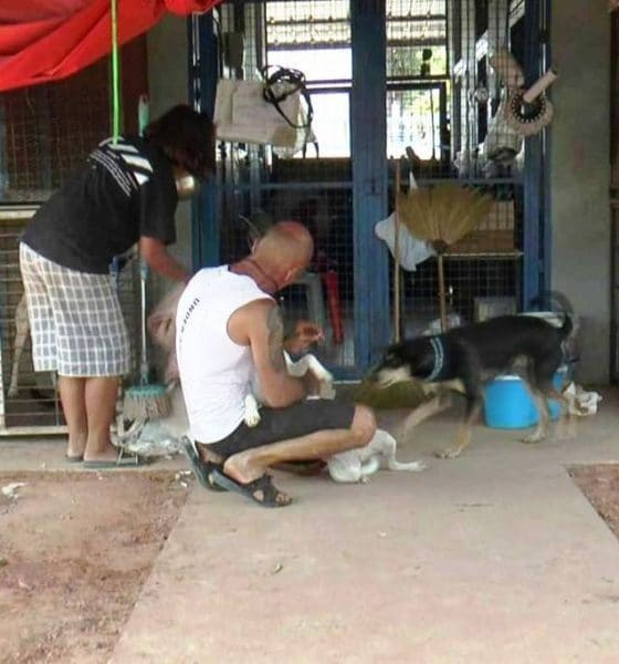 Frenchman,Dog Shelter, dogs