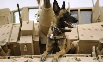 Questions continue to circulate amongst animal rights groups worldwide regarding the fate of service dogs that were allegedly left behind in Afghanistan.