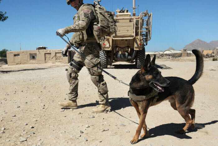 The American Humane society slammed Biden for leaving the contract dogs behind in Afghanistan