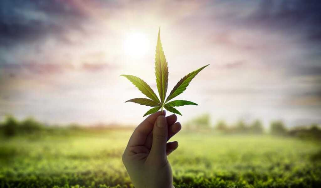 The Newbie's Guide to Cannabis in 2021