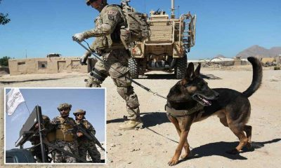 US Military Left Service Dogs Behind in Afghanistan