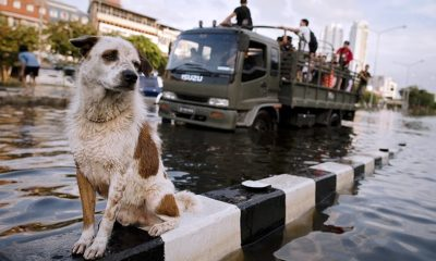 Soi Dog Foundation Provides Food for Animals Affected by Floods