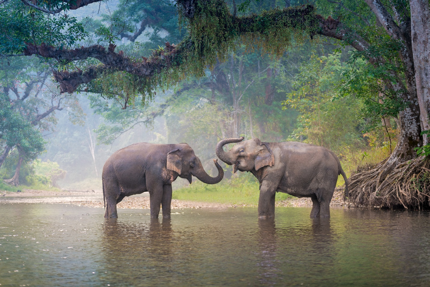 Elephants playing in the water  Description automatically generated with medium confidence
