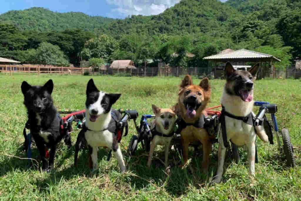 pet-dog-rescue-special needs pets